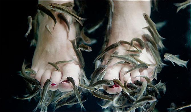 fish-foot-spa.jpg