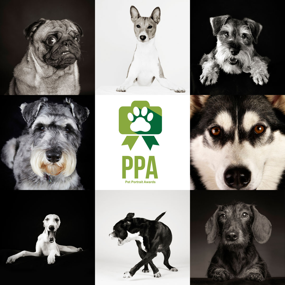 Pet Portrait Photographer Essex